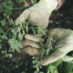 Comprendre les effets des mauvaises herbes