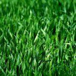 Comment semer de l'herbe ?
